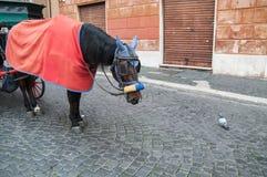 Pferd und Taube Stockfoto