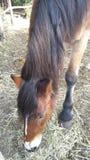 Pferd und Vorstecknagel lizenzfreie stockfotos