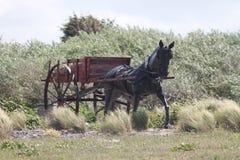 Pferd und Warenkorb für das Shrimping Stockfotografie