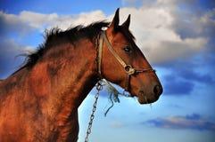 Pferd und Wolken Stockfoto