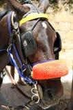 Pferd und Zaum Stockbild