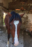 Pferd verlassener Raum Lizenzfreie Stockfotografie