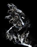 Pferd vom Wasser Stockbild