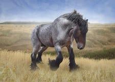 Pferd von Brabancon-Zucht - belgischer Schwerschlepper Lizenzfreies Stockbild