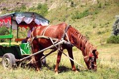 Pferd vorgespannt zu einem Zelt mit einem Kutscher, der auf dem Rasen weiden lässt Lizenzfreie Stockfotos