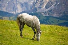 Pferd weiden lassen in den Bergen Stockfoto