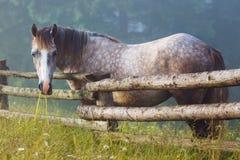 Pferd, welches das Gras kaut Stockbild