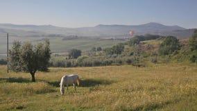 Pferd wird auf einer Wiese weiden lassen Stockbild