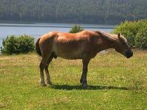 Pferd wird auf sonniger Wiese weiden lassen Porträt der jungen Frau auf Weiß Sommer See Baikal Reise zu Pferd Stockfotos