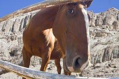 Pferd am Zaun Stockbild