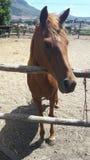 Pferd am Zaun lizenzfreies stockbild