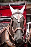 Pferd in Zermat Lizenzfreies Stockfoto