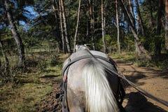 Pferd zieht einen Warenkorb durch einen Wald Stockbild