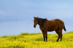 Pferd zwischen Blumen Stockfotografie