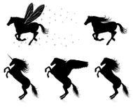 Pferde. Stockbild