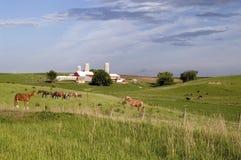 Pferde 2 Lizenzfreie Stockfotografie