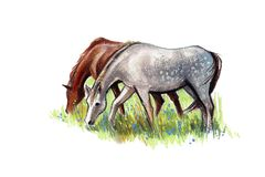 Pferde Lizenzfreie Abbildung
