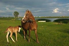 Pferde 2 Lizenzfreies Stockbild