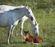 Pferde Lizenzfreie Stockfotos