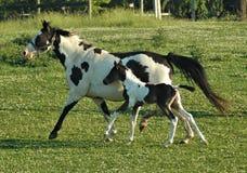 Pferde 61 Lizenzfreies Stockfoto