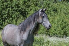 Pferde Lizenzfreies Stockbild