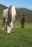 Pferde lizenzfreies stockfoto