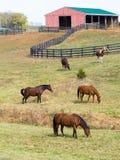 Pferde auf Bauernhof Stockfotos
