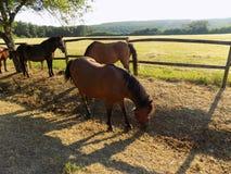 Pferde auf Bauernhof Lizenzfreies Stockbild