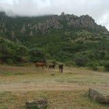 Pferde auf Berg Stockbilder