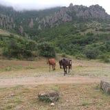 Pferde auf Berg Stockbild