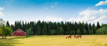 Pferde auf dem Bauernhof Stockfotografie