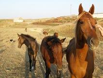 Pferde auf dem Bauernhof Stockbild
