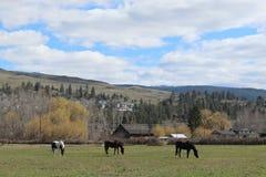 Pferde auf dem Bauernhofgebiet mit Bergen und Himmelhintergrund Lizenzfreie Stockfotografie