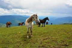 Pferde auf dem Berg stockfotos