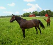 Pferde auf dem Gebiet Lizenzfreies Stockfoto