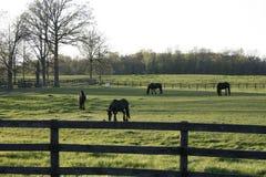 Pferde auf dem Gebiet Lizenzfreie Stockfotos