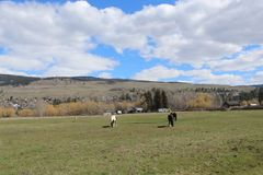 Pferde auf dem Gebiet mit Bergen und Himmelhintergrund Lizenzfreie Stockfotografie