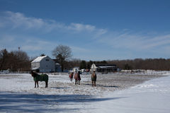 Pferde auf dem Schnee Lizenzfreie Stockfotografie