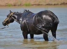 Pferde auf dem Weg Stockfotografie