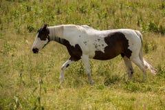 Pferde auf der grünen Wiese stockfoto