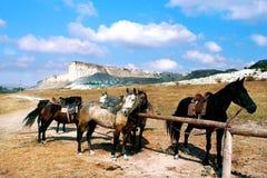 Pferde auf der Ranch stockfotografie