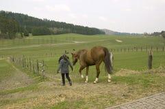 Pferde auf der Weide. Lizenzfreies Stockfoto