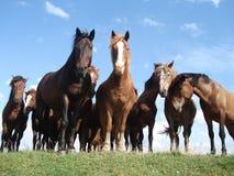Pferde auf der Weide Lizenzfreies Stockbild