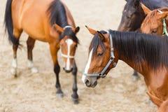 Pferde auf der Wiese Stockfotografie