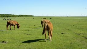 Pferde auf der Wiese Lizenzfreie Stockbilder