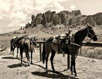 Pferde auf dort Ranch Lizenzfreies Stockbild