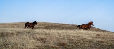 Pferde auf einem Feld Lizenzfreie Stockbilder