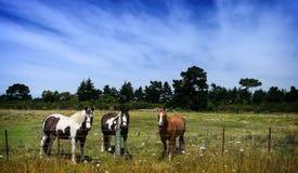 Pferde auf einem Feld am Pferdebauernhof Stockfotos