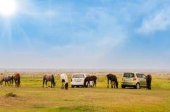 Pferde auf einem Gebiet Lizenzfreie Stockfotografie