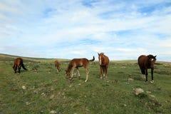 Pferde auf einem Gebiet Stockfotos